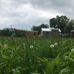 Les Tiny Houses de l'espoir